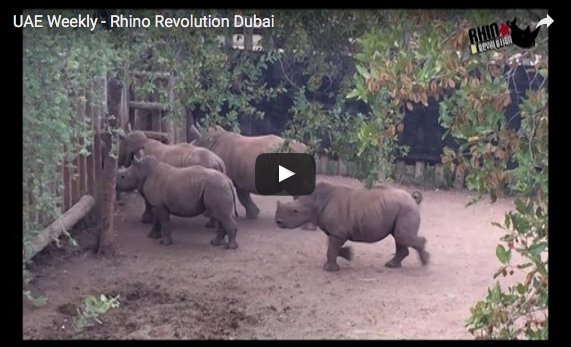 Ubuntu Rhino